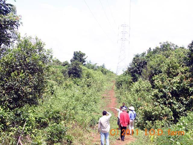 http://www.iodfarm.com/pic-iod/p20110330-07.jpg